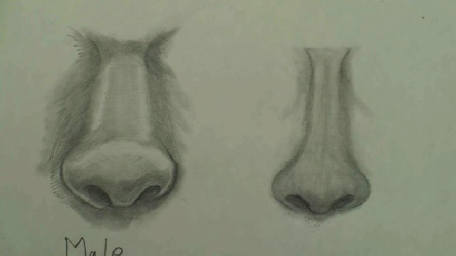 How to Draw the Female Nose Step by Step. <p>  <script type=`text/javascript`><!--  google_ad_client = `pub-6730899040960500`;                /* 728x15, created 2/3/10 */                google_ad_slot = `1049141337`;                google_ad_width = 728;                google_ad_height = 15;  // --></script>  <script src=`https://pagead2.googlesyndication.com/pagead/show_ads.js` type=`text/javascript`></script>  </p>  <p style=`text-align: center;`><span style=`font-size: xx-large;`>FREE Downloadable PDF of this lesson AND a supply list at the bottom!</span></p>  <p>Today YOU are going to draw the female nose. In comparison to the Male nose (left) the female nose is: 1.) less pronounced or smaller than the male nose 2.) has a more narrow bridge 3.) has smaller nostrils 4.) slightly rounder at the bottom (this is not the case for EVERY person though) 5.) had less shadow area around the `eye socket` or orbit, on both sides of the bridge at the top of the nose.</p>  <p><img title=`draw female nose 1 step by step` src=`https://sites.google.com/site/drawfemalenose/_/rsrc/1261153005753/home/1fPicture.jpg` alt=`draw female nose 1 step by step` width=`853` height=`480` /></p>  <p>STEP 1- In step one of drawing the female nose, focus your attention on the shapes. There are three main shapes. 1.) An oval at the bottom, 2.) A tall trapezoid for the bridge of the nose. 3.) An upside down trapezoid at the top of the nose. 4.) In addition to the major shapes, don`t forget to add the shapes for the nostrils.</p>  <p><img title=`draw female nose step by step 2` src=`https://sites.google.com/site/drawfemalenose/_/rsrc/1261153045967/home/2fPicture.jpg` alt=`draw female nose step by step 2` width=`853` height=`480` /></p>  <p>STEP 2- For step two, simply darken the nostrils. The nostrils will be the darkest tone on any persons nose.</p>  <p><img title=`draw female nose step by step 3` src=`https://sites.google.com/site/drawfemalenose/_/rsrc/1261153086117/home/3fPicture.jpg` alt=`draw female nose step by step 3` width=`853` height=`480` /></p>  <p>STEP 3- For this step, create a shadow at the bottom of the nose.</p>  <p><img title=`draw female nose step by step 4` src=`https://sites.google.com/site/drawfemalenose/_/rsrc/1261153170553/home/4fPicture.jpg` alt=`draw female nose step by step 4` width=`853` height=`480` /></p>  <p>STEP 4- Erase the lines on the sides of the bridge of the nose. (This is where most people go wrong in drawing the nose!) The only part of the nose that can be expressed in linear form is the bottom of the nose (Below and to the sides of the nostrils...especially the sides).</p>  <p><img title=`draw female nose step by step 5` src=`https://sites.google.com/site/drawfemalenose/_/rsrc/1261153261536/home/5fPicture.jpg` alt=`draw female nose step by step 5` width=`853` height=`480` /></p>  <p>STEP 5- Replace the solid lines with soft `cross hatching` (a fancy term for shading- `hatches` are multiple lines, created by the tip of the pencil used to create darker tones....watch the video at the top if you do not understand).</p>  <p><img title=`draw female nose step by step 6` src=`https://sites.google.com/site/drawfemalenose/_/rsrc/1261153289390/home/6fPicture.jpg` alt=`draw female nose step by step 6` width=`853` height=`480` /></p>  <p>STEP 6- Smudge the cross hatching with a tortillion (blending stump or stub).....Not only on the bridge of the nose, but also where you feel in necessary. I usually do a few layers of hatching, followed by smudging.</p>  <p><img title=`draw female nose 7 step by step` src=`https://sites.google.com/site/drawfemalenose/_/rsrc/1261153327023/home/7fPicture.jpg` alt=`draw female nose 7 step by step` width=`853` height=`480` /></p>  <p>STEP 7- I am putting on the finishing touches. I used my eraser to make highlights on the nose. IMPORTANT: The female nose (right) is smoothed out/ polished / finished, more than the male nose........ How does an artist smooth out/polish/finish the nose?....By 1.) hatching with the pencil 2.) smudging the hatches with the tortillion and 3.) using the eraser to create highlights.</p>  <p>&nbsp;</p>  <p>&nbsp;</p>  <p><img title=`draw female nose step by step 8` src=`https://sites.google.com/site/drawfemalenose/_/rsrc/1261153354413/home/8fPicture.jpg` alt=`draw female nose step by step 8` width=`853` height=`480` /></p>  <p>STEP 8- In the final step I darkened the nostrils (For the second time).</p>  <p>  <object width=`560` height=`340` data=`https://www.youtube.com/v/i0wKWFoEwn8&amp;hl=en_US&amp;fs=1&amp;` type=`application/x-shockwave-flash`>  <param name=`allowFullScreen` value=`true` />  <param name=`allowscriptaccess` value=`always` />  <param name=`src` value=`https://www.youtube.com/v/i0wKWFoEwn8&amp;hl=en_US&amp;fs=1&amp;` />  <param name=`allowfullscreen` value=`true` />  </object>  </p>  <p>&nbsp;</p>  <p>(This lesson is demonstrated in the video above).</p>  <p>&nbsp;</p>  <p>&nbsp;</p>  <p><span style=`font-size: x-large;`>- Buy the supplies that I use: (Below)</span></p>  <p>&nbsp;</p>  <form action=`https://www.anrdoezrs.net/interactive` method=`get`>   <table style=`width: 600px;` border=`0` cellspacing=`0` cellpadding=`5`>  <tbody>  <tr>  <td width=`10%` valign=`top`><img src=`https://www.dick-blick.com/items/229/26/22926-1009-1-2ww-m.jpg` border=`0` alt=`General`s Sketchmate Drawing Set` /></td>  <td valign=`top`>  <p><strong><span style=`font-size: medium;`>General`s Sketchmate Drawing Set</span></strong></p>  <p><span style=`font-size: x-small;`>This complete sketching set is ideal for beginning and experienced artists alike. It offers a set of high-quality products at a low price. General`s Sketchmate Drawing Set contains the following materials: 3 graphite drawing pencils in varying degrees of hardness 2 charcoal pencils in varying degrees of hardness 1 layout Pencil Sandpaddle sharpener White eraser Blending tortillon Sharpener for fine charcoal and graphite pencils Pencils are pre-sharpened.</span></p>  <hr />  <input name=`pid` type=`hidden` value=`3724826` /> <input name=`aid` type=`hidden` value=`10495307` /> <input name=`cjsku` type=`hidden` value=`22926-1009` /> <input name=`url` type=`hidden` value=`https://www.dickblick.com/products/generals-sketchmate-drawing-set/?wmcp=cj&amp;wmcid=feeds&amp;wmckw=22926-1009-1282` /> <input type=`submit` value=`Buy` /></td>  </tr>  </tbody>  </table>  </form>  <p><img src=`https://www.awltovhc.com/image-3724826-10495307` border=`0` alt=`` width=`1` height=`1` /></p>  <form action=`https://www.jdoqocy.com/interactive` method=`get`>   <table style=`width: 600px;` border=`0` cellspacing=`0` cellpadding=`5`>  <tbody>  <tr>  <td width=`10%` valign=`top`><img src=`https://www.dick-blick.com/items/222/06/22206-0159-2ww-m.jpg` border=`0` alt=`15-Piece Drawing Set` /></td>  <td valign=`top`>  <p><strong><span style=`font-size: medium;`>15-Piece Drawing Set</span></strong></p>  <p><span style=`font-size: x-small;`>This convenient set has everything you need to draw anywhere. It includes the following materials: 12 Faber-Castell 9000 pencils (8B, 7B, 6B, 5B, 4B, 3B, 2B, B, HB, F, H, and 2H) Stainless steel sharpener Dust-free vinyl eraser Black nylon pencil bag</span></p>  <hr />  <input name=`pid` type=`hidden` value=`3724826` /> <input name=`aid` type=`hidden` value=`10495307` /> <input name=`cjsku` type=`hidden` value=`22206-0159` /> <input name=`url` type=`hidden` value=`https://www.dickblick.com/products/faber-castell-9000-pencils/?wmcp=cj&amp;wmcid=feeds&amp;wmckw=22206-0159-8888` /> <input type=`submit` value=`Buy` /></td>  </tr>  </tbody>  </table>  </form>  <p><img src=`https://www.ftjcfx.com/image-3724826-10495307` border=`0` alt=`` width=`1` height=`1` /></p>  <form action=`https://www.kqzyfj.com/interactive` method=`get`>   <table style=`width: 600px;` border=`0` cellspacing=`0` cellpadding=`5`>  <tbody>  <tr>  <td width=`10%` valign=`top`><img src=`https://www.dick-blick.com/items/103/04/10304-1013-1-2ww-m.jpg` border=`0` alt=`50-Sheet Pads` /></td>  <td valign=`top`>  <p><strong><span style=`font-size: medium;`>50-Sheet Pads</span></strong></p>  <p><span style=`font-size: x-small;`>Tape-bound on the short side.</span></p>  <hr />  <input name=`pid` type=`hidden` value=`3724826` /> <input name=`aid` type=`hidden` value=`10495307` /> <input name=`cjsku` type=`hidden` value=`10304-1013` /> <input name=`url` type=`hidden` value=`https://www.dickblick.com/products/bienfang-giant-drawing-paper-pads/?wmcp=cj&amp;wmcid=feeds&amp;wmckw=10304-1013-810` /> <input type=`submit` value=`Buy` /></td>  </tr>  </tbody>  </table>  </form>  <p><img src=`https://www.tqlkg.com/image-3724826-10495307` border=`0` alt=`` width=`1` height=`1` /></p>  <form action=`https://www.dpbolvw.net/interactive` method=`get`>   <table style=`width: 600px;` border=`0` cellspacing=`0` cellpadding=`5`>  <tbody>  <tr>  <td width=`10%` valign=`top`><img src=`https://www.dick-blick.com/items/103/16/10316-1003-1-2ww-m.jpg` border=`0` alt=`Strathmore 400 Series Drawing Paper Pads` /></td>  <td valign=`top`>  <p><strong><span style=`font-size: medium;`>Strathmore 400 Series Drawing Paper Pads</span></strong></p>  <p><span style=`font-size: x-small;`>Strathmore 400 is one of the most versatile sheets Strathmore offers. This off-white drawing paper, with a uniform surface, is ideal for sketching and most finished work. It readily accepts pen and ink, pencil, crayon, charcoal, light washes, and markers. Acid-free. Pads contain 24 sheets of 80 lb (130 gsm) paper, spiral-bound on the short side.</span></p>  <hr />  <input name=`pid` type=`hidden` value=`3724826` /> <input name=`aid` type=`hidden` value=`10495307` /> <input name=`cjsku` type=`hidden` value=`10316-1017` /> <input name=`url` type=`hidden` value=`https://www.dickblick.com/products/strathmore-400-series-drawing-paper-pads/?wmcp=cj&amp;wmcid=feeds&amp;wmckw=10316-1017-806` /> <input type=`submit` value=`Buy` /></td>  </tr>  </tbody>  </table>  </form>  <p><span style=`font-size: x-large;`>PDF of How to Draw the Female Nose (STEP by STEP)- <a title=`Draw Female Nose PDF` href=`https://iown.website/bx/_files/113images/articles_img_files/draw_the_female_nose_step_by_step.pdf`><span style=`font-size: xx-large;`>CLICK HERE</span></a></span></p>