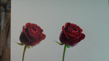 How to Draw a Rose Step by Step - Merrill Kazanjian