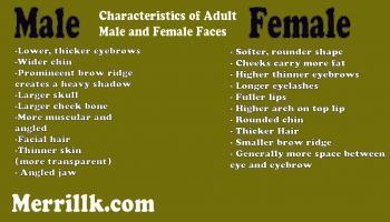Male vs. Female Skull - Merrill Kazanjian