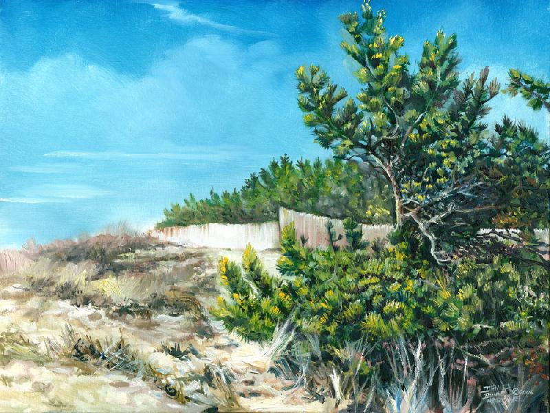 Beach Cedars - Southampton, N.Y.. This is a picture of the beach at Southampton, Long Island, New York. This is a different feel from my usual Native American theme.<br /><br />The original on canvas is unframed, $900 plus shipping charges, oil on canvas. For more information contact the artist.