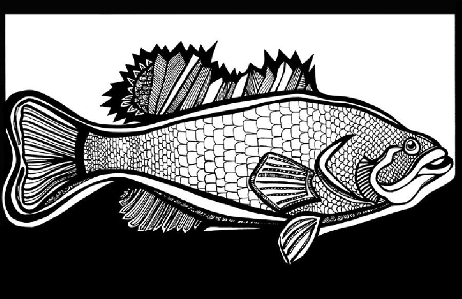 Large Mouth Bass (Fish 1) Blk & White. Select fine art paper or museum quality canvas. First black and white ever completed. Pricing upon request. 11 x 17
