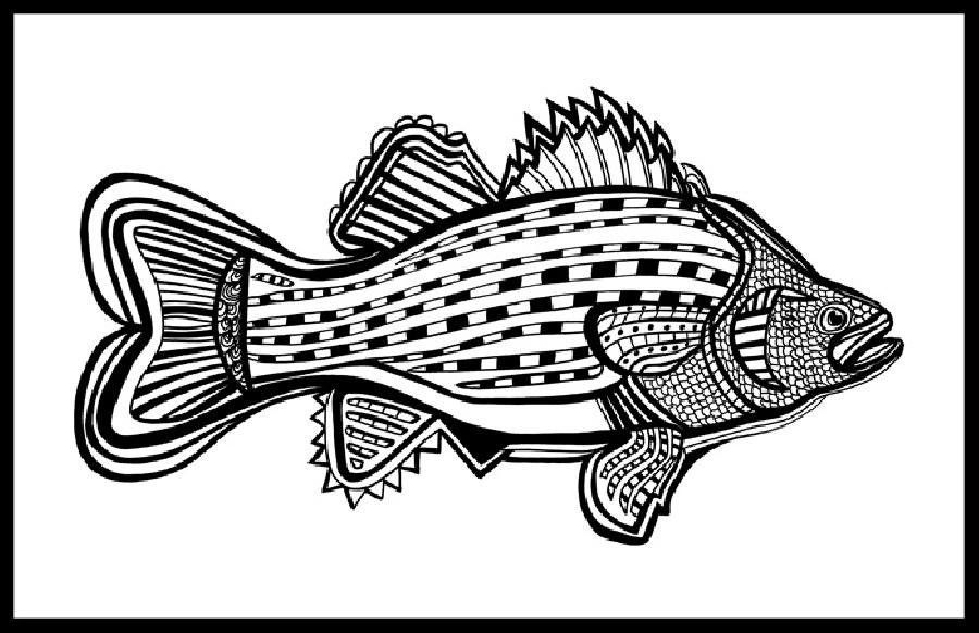 Porgy (Fish 6) Blk & White. Available in museum quality fine art paper and museum quality canvas. Canvas is gallery wrapped with 1 1/2 inch deep bars. Pricing upon request. 11 x 17