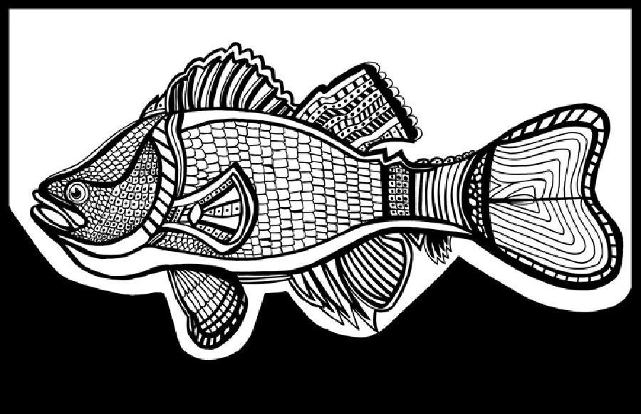 Sea Bass (Fish 7) Blk & White. Available in museum quality fine art paper and museum quality canvas. Pricing upon request. 11 x 17