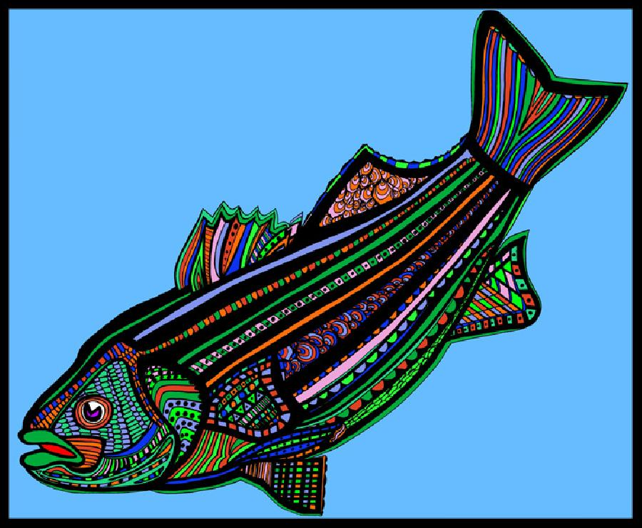 Striped Bass (Fish9- Color6). A new color variation of the striped bass with a solid background. Available in fine art paper or museum quality canvas. Pricing upon request. 16 x 20 inches.
