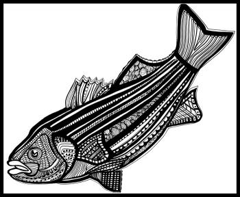 Striped Bass (Fish9) Blk & White by Fred Kelly