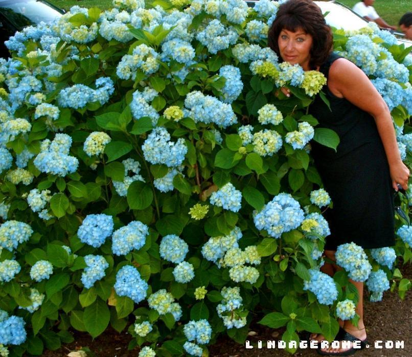 Me with Blue Hydrangea Flowers. I notice when I am enjoying life away from my canvas, a whole wealth of inspiration sets in. ART IMITATES LIFE.` A small area can be brilliantly colored into a magical wonderland. Fashion can help your palette soar.