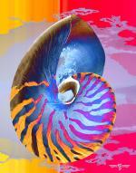 Nautilus 5