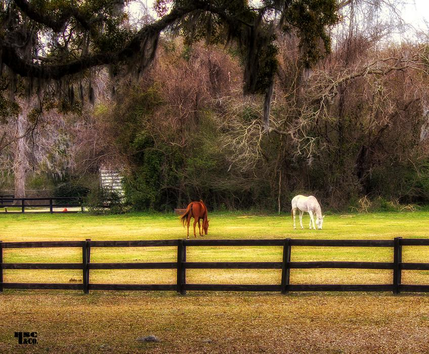 horse farm. All images are copyrighted. Original work reproduced on archival Giclee Print. A certificate is supplied .All are roled and shipped in a special cardboard container for protection<br />