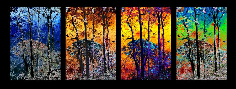 four Seasons. All images are copyrighted. Original work reproduced on archival Giclee Print. A certificate is supplied .All are roled and shipped in a special cardboard container for protection shipping add $9