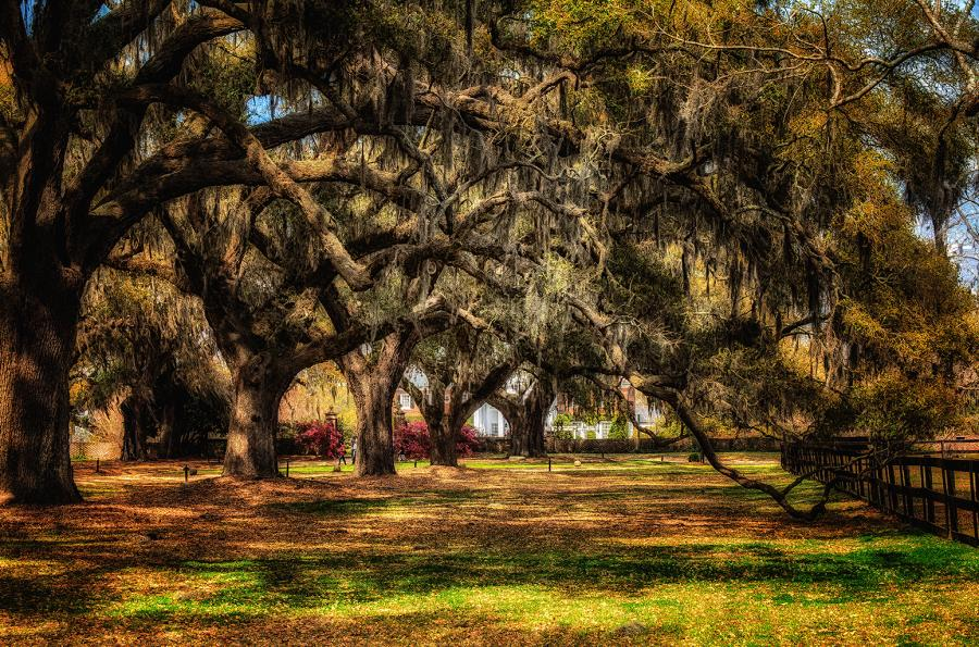 WINTER WOODS CHARLESTON. All images are copyrighted. Original work reproduced on archival Giclee Print. A certificate is supplied .All are roled and shipped in a special cardboard container for protection shipping add $9