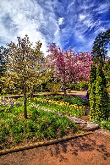 Garden 11 - H. Scott Cushing