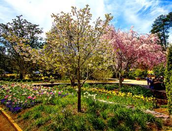 Garden Trees - H. Scott Cushing
