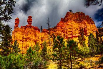 Oak Canyon 4 - H. Scott Cushing