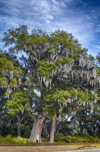 Tree - H. Scott Cushing