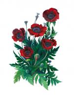 Red Poppies II - white background - Marilyn Moskowitz