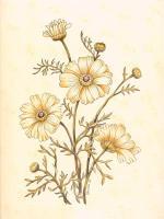 Botanical C