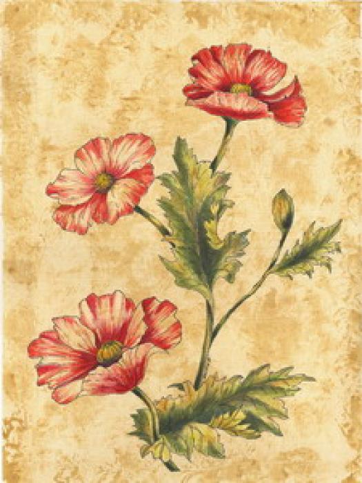 Wild Flowers-1 - Vessela