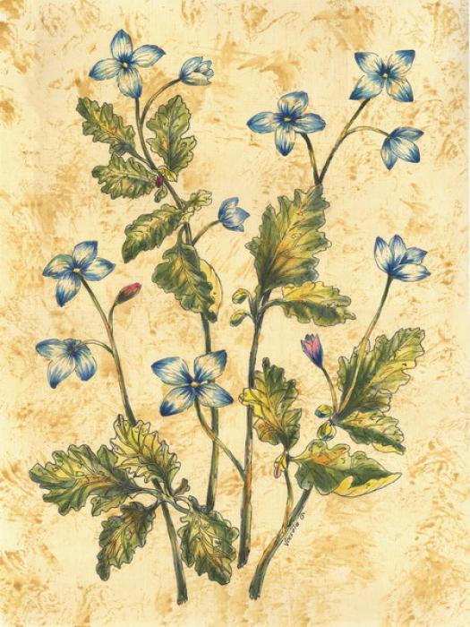 Wild Flowers-3 - Vessela