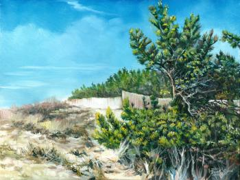 Beach Cedars - Southampton, N.Y. - David Martine