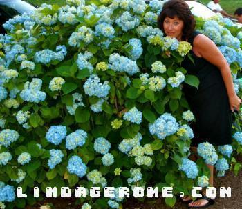 Me with Blue Hydrangea Flowers - Linda Gerome