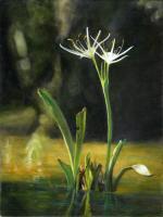 Wild-flower-white