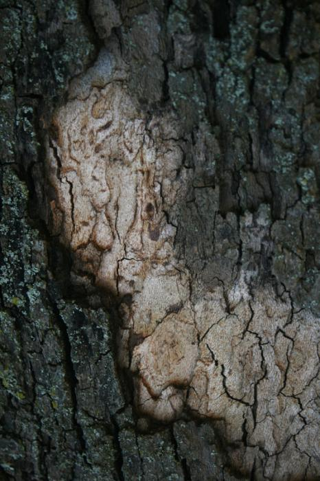 Bark Face, 2012 - Katherine Criss's work