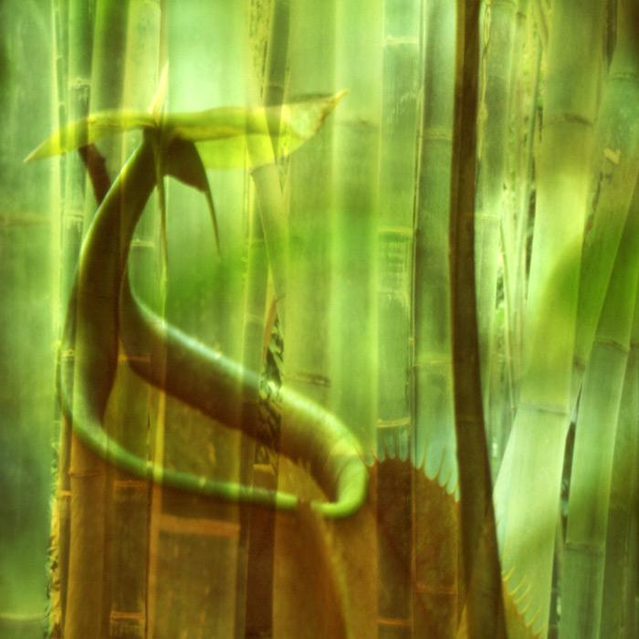 Hidden In The Bamboo, 2003 - Katherine Criss's work