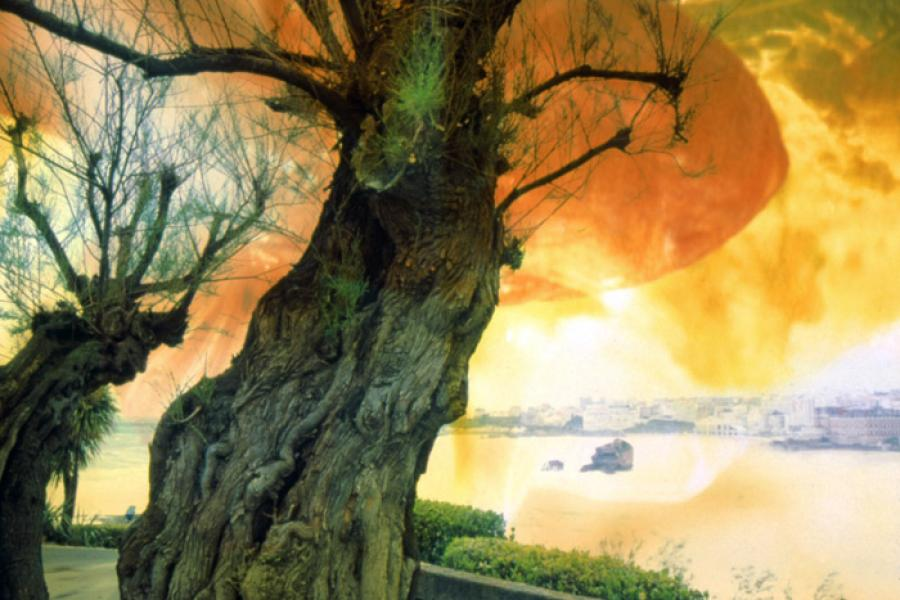 Old Tree Over Biarritz Bay, 2004 - Katherine Criss's work