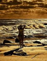 --- Seascape