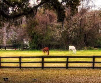 horse farm - H. Scott Cushing