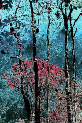 Blue (2) - H. Scott Cushing