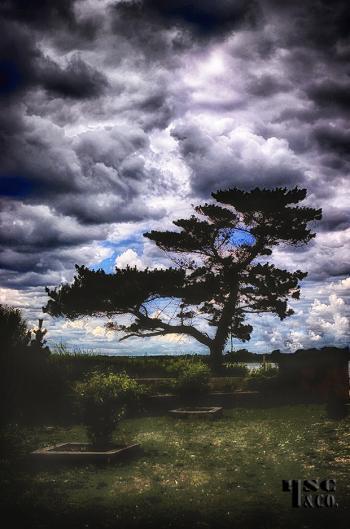 tobay beach - H. Scott Cushing