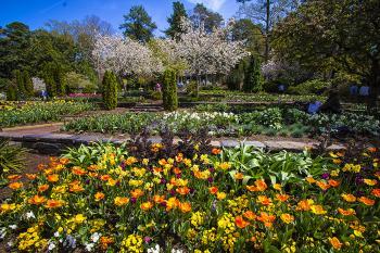 Garden 5 - H. Scott Cushing