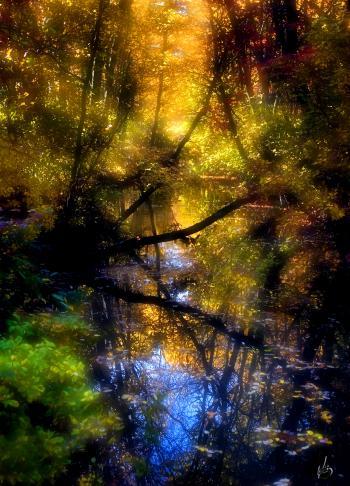mill pond - H. Scott Cushing