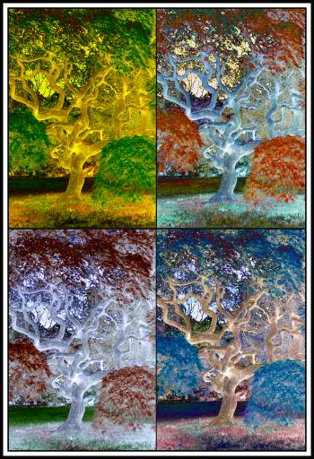 Printed Four Seasons - H. Scott Cushing
