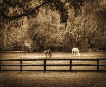HORSES - H. Scott Cushing