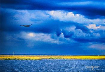 Blue Sky - H. Scott Cushing