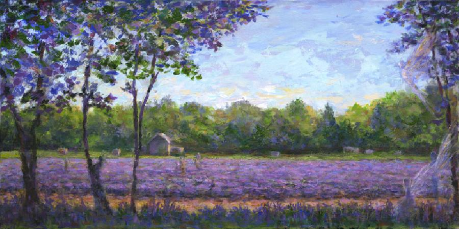 Lavender Fields. Lavander Fields, East Marion / 2008 / Acrylic on Canvas / 18 x 36 inches / Original Sold, Giclee Available