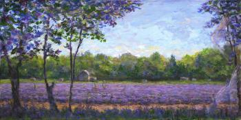 Lavender Fields - Terrence Joyce