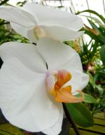Orchid2