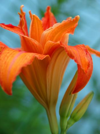 Orange - Bruce Passen