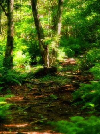Emerald-Dream - Bruce Passen