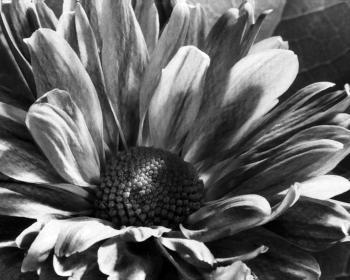 Home Flower - Terry Amburgey